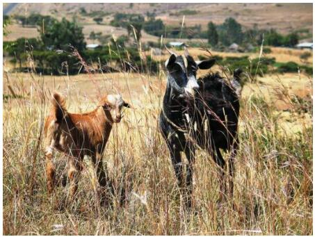 Agriculture and animal husbandry are important economic factors