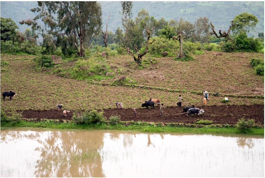 Field work in the Simien Mountains