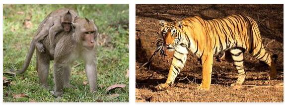 Cambodia Animals