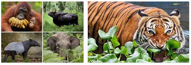 Malaysia Animals