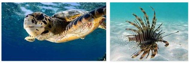 Maldives Animals