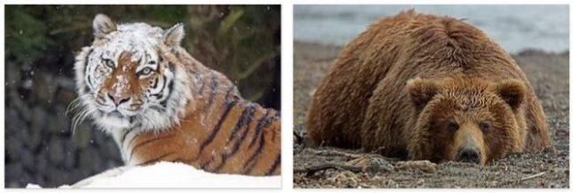 Russia Animals