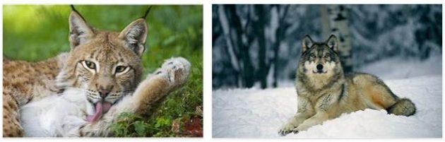 Serbia Animals